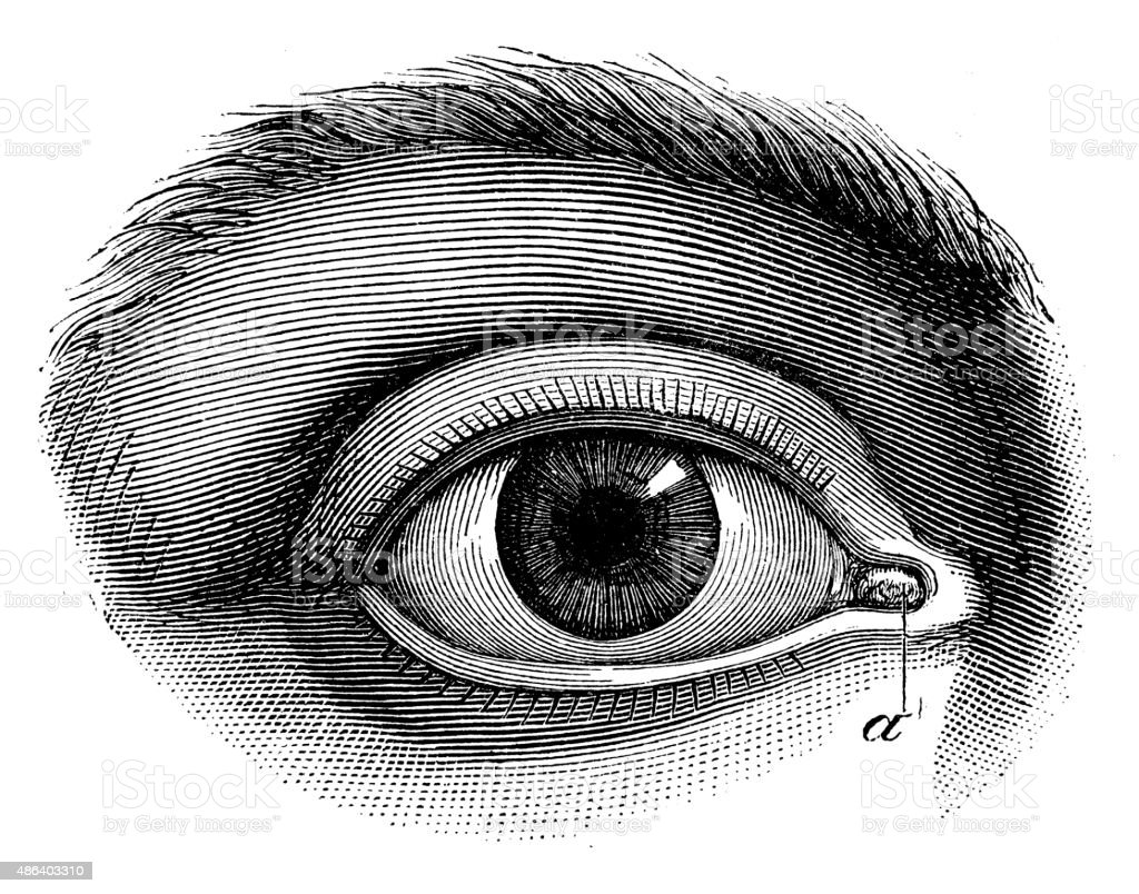 Antique medical scientific illustration high-resolution: human eye vector art illustration