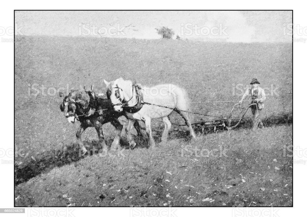 Antique photo of paintings: Farmer vector art illustration