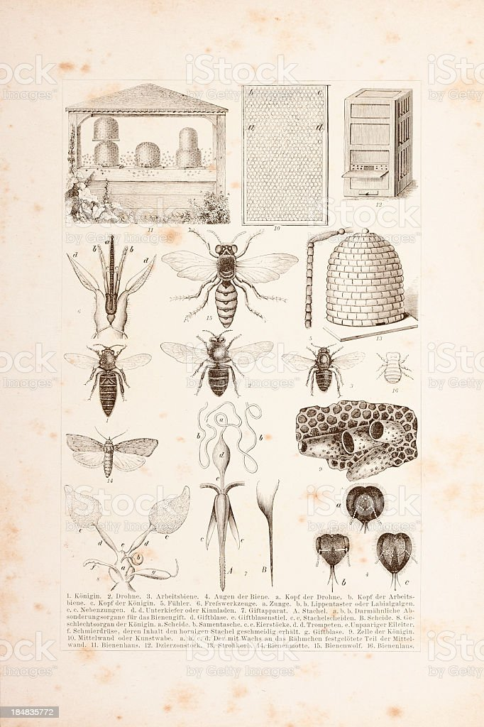 Engraving of bees and apiculture vector art illustration