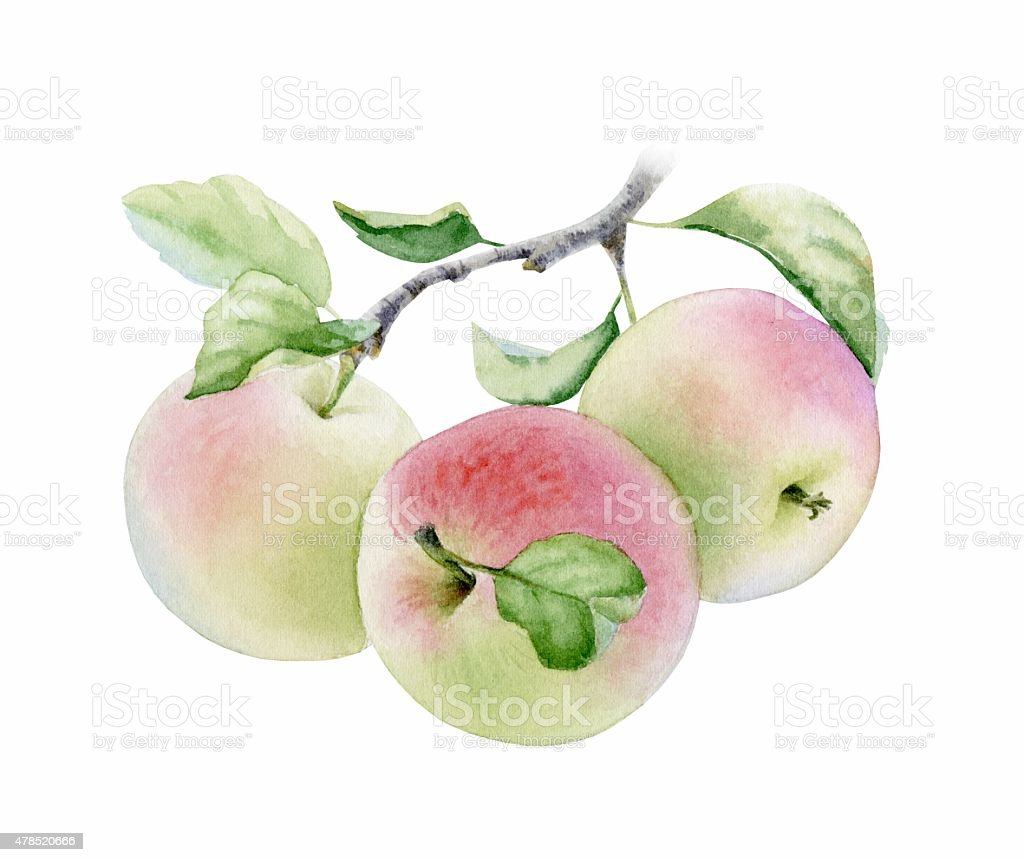 Apple stockowa ilustracja wektorowa royalty-free