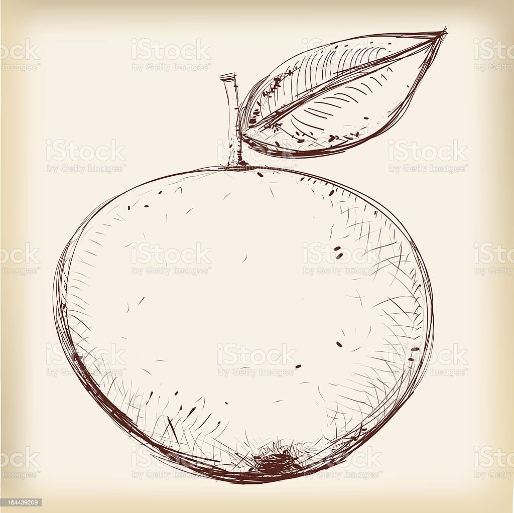 Apple Pencil Drawing In Vintage Style vector art illustration