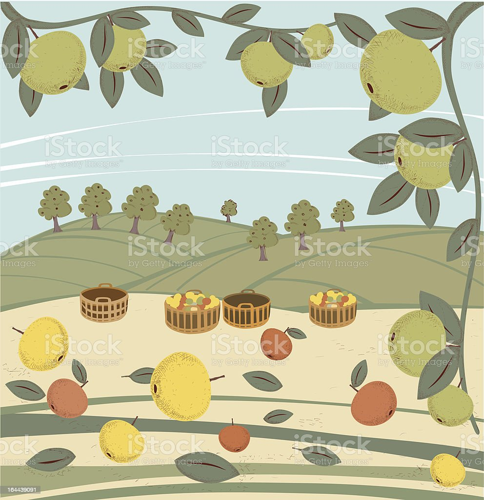 Apples, Baskets And Orchard On Hills royalty-free stock vector art