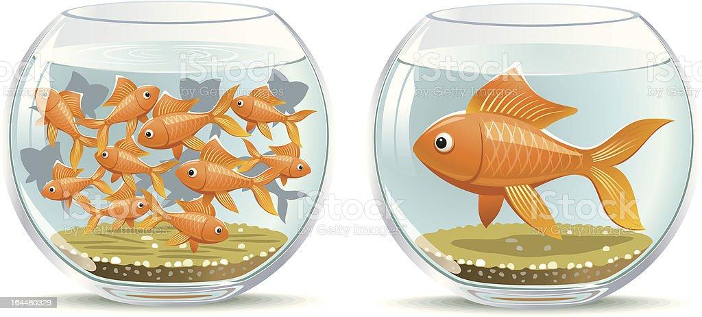 Aquarium comparison vector art illustration