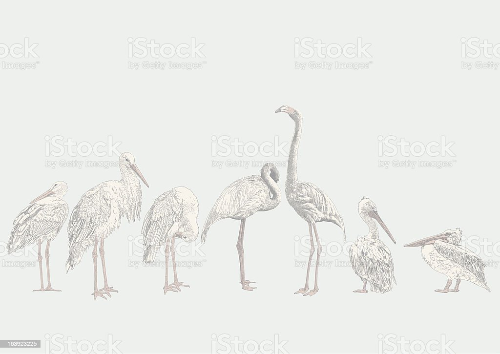 Aquatic Birds vector art illustration