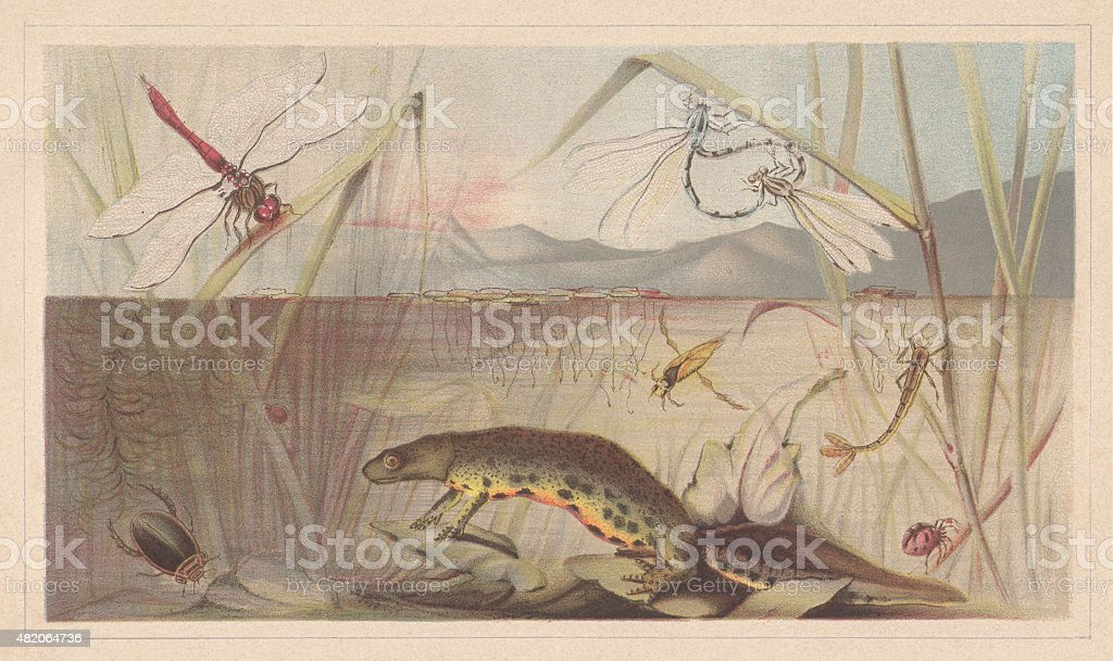 Aquatic insects, lithograph, published in 1868 vector art illustration