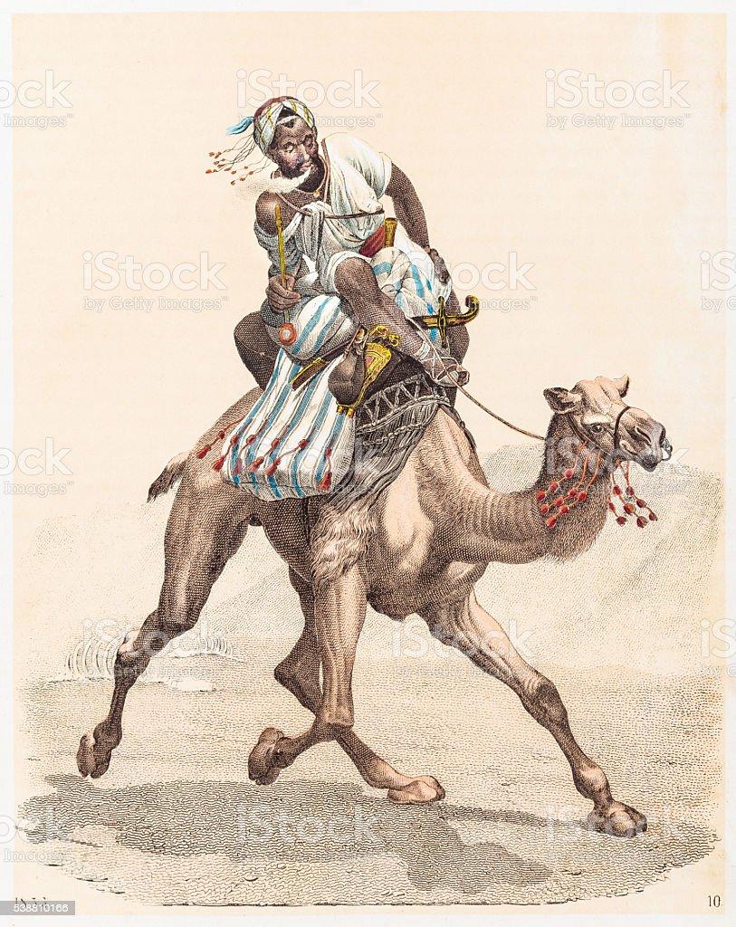Arabian camel engraving 1853 vector art illustration