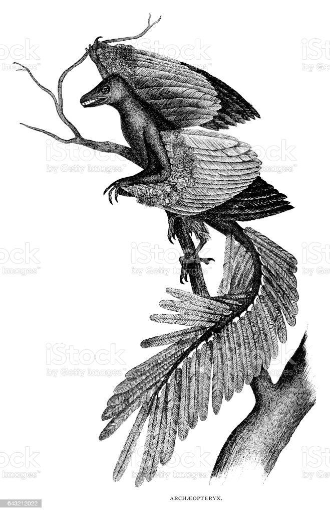 Archaeopteryx vector art illustration