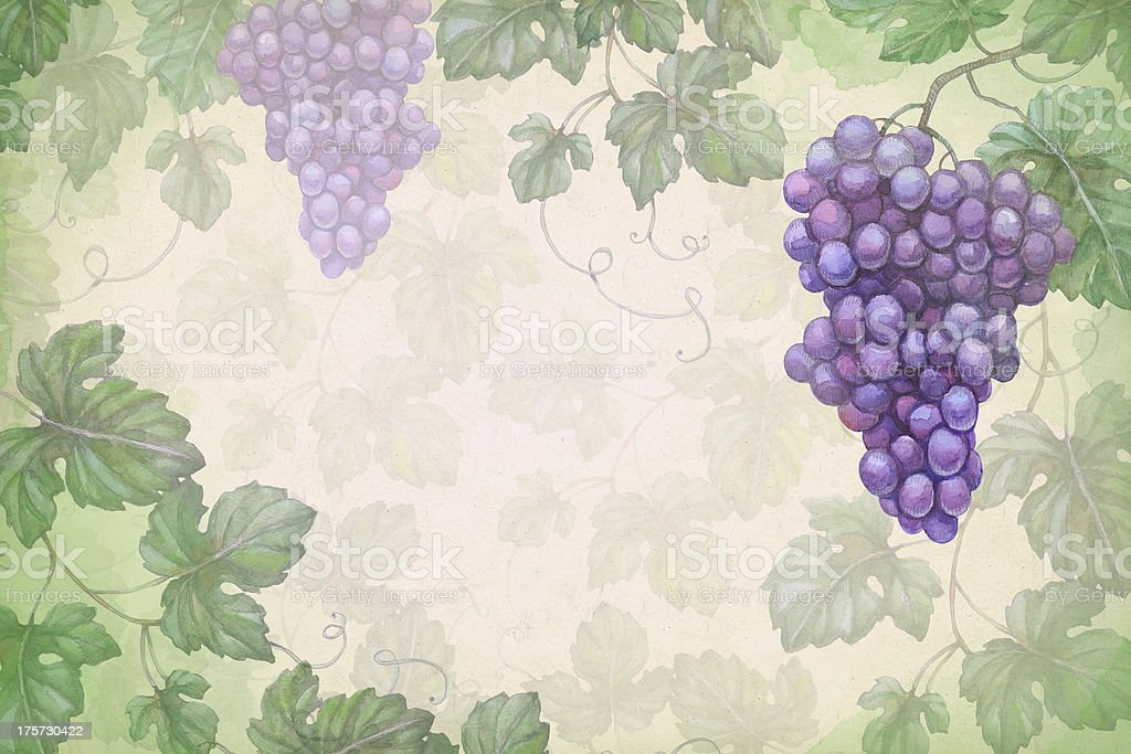 Artistic background with watercolor illustration of grapes vector art illustration
