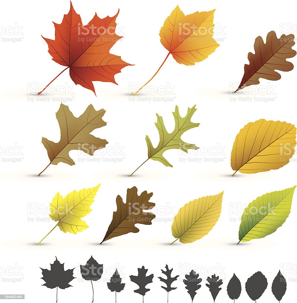 Autumn leaves collection vector art illustration