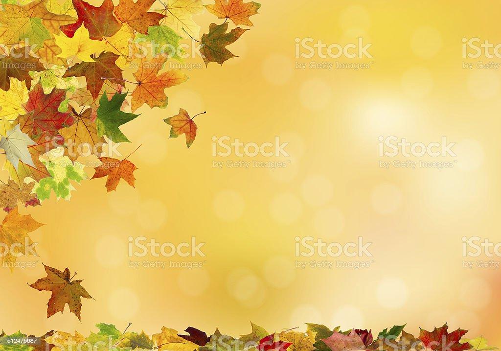 Autumn maple leaves falling vector art illustration