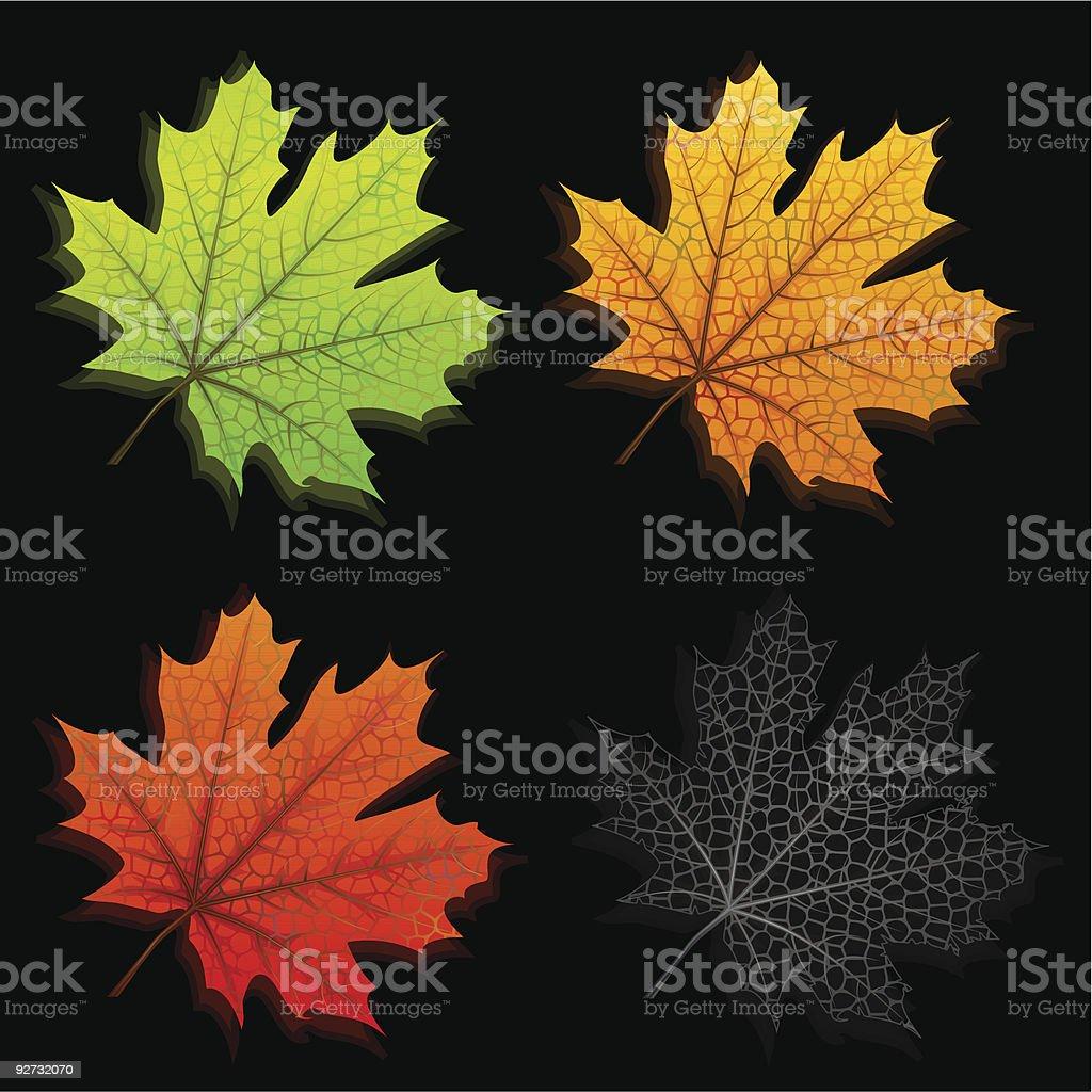 Autumn maple leaves royalty-free stock vector art