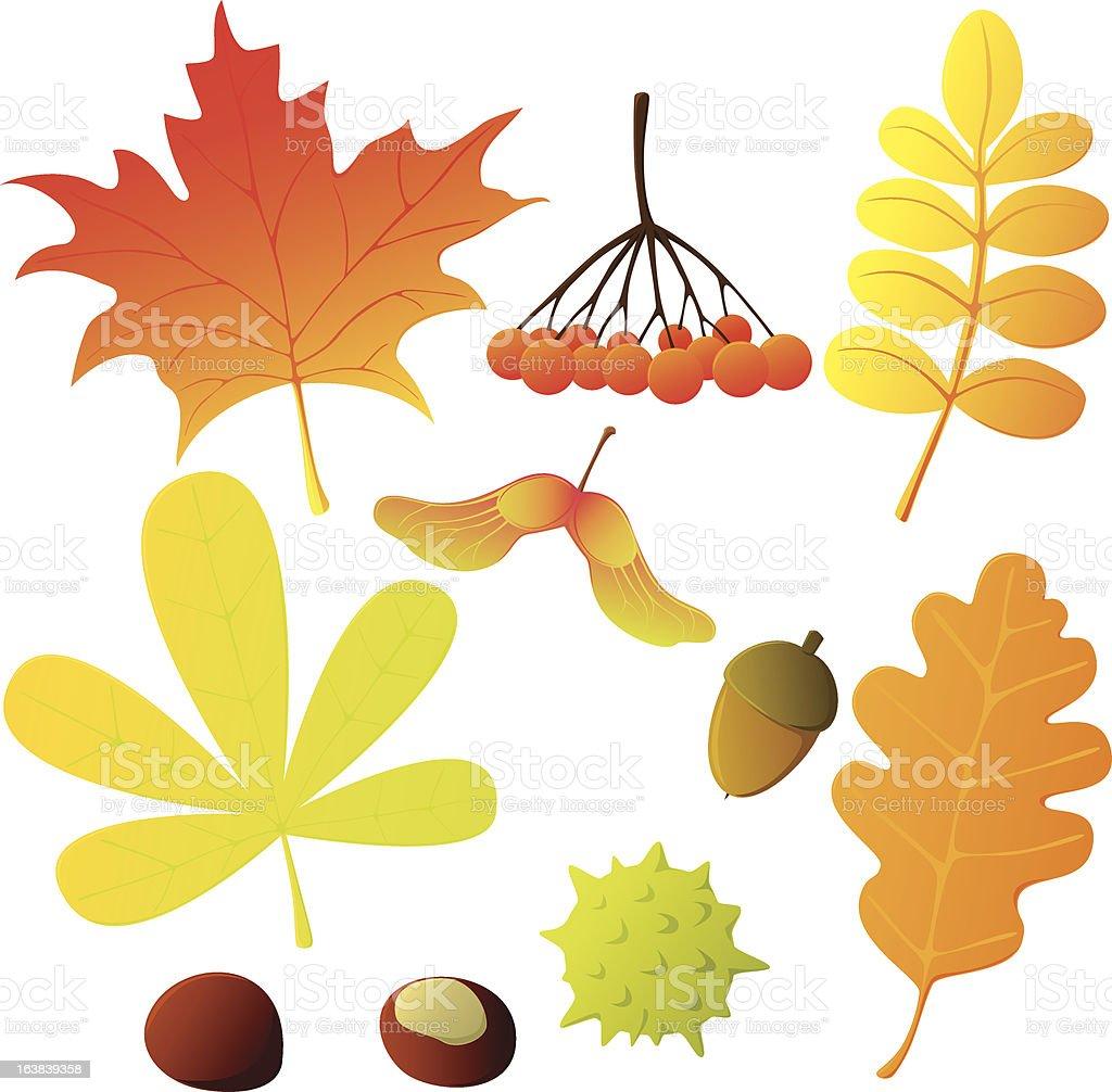 autumn treasures royalty-free stock vector art