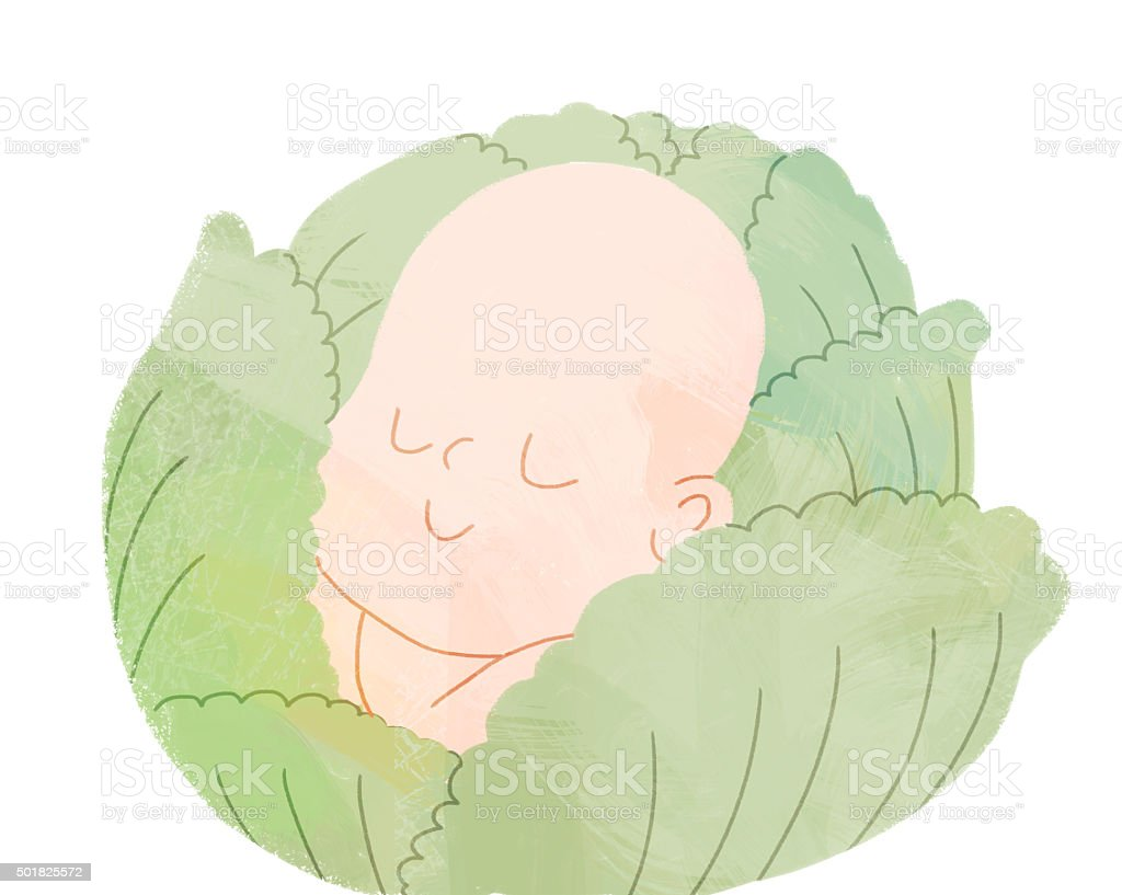 Baby in the head of cabbage vector art illustration