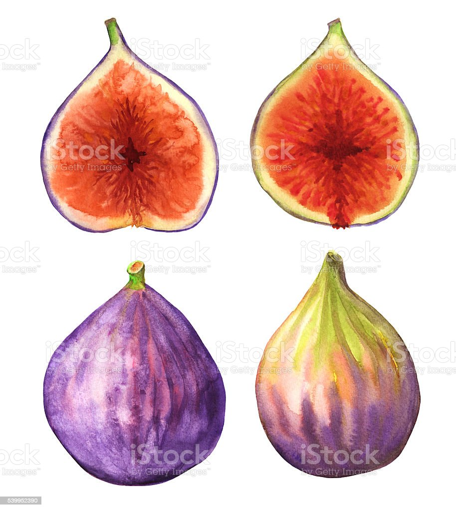 background with figs vector art illustration