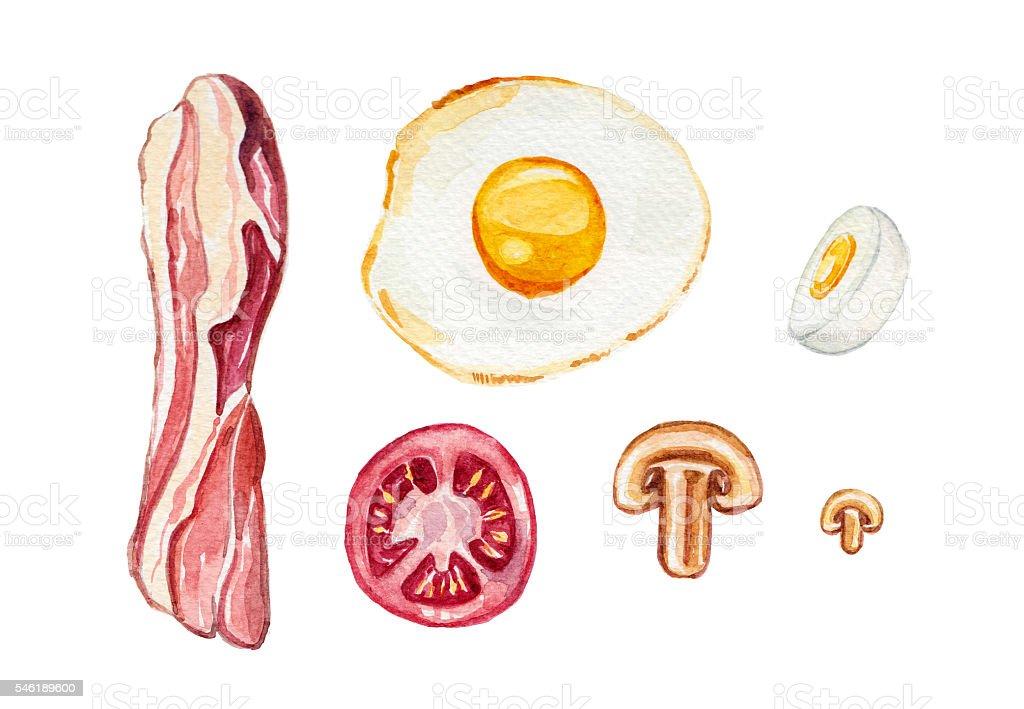 Bacon & Egg - Watercolour illustration vector art illustration