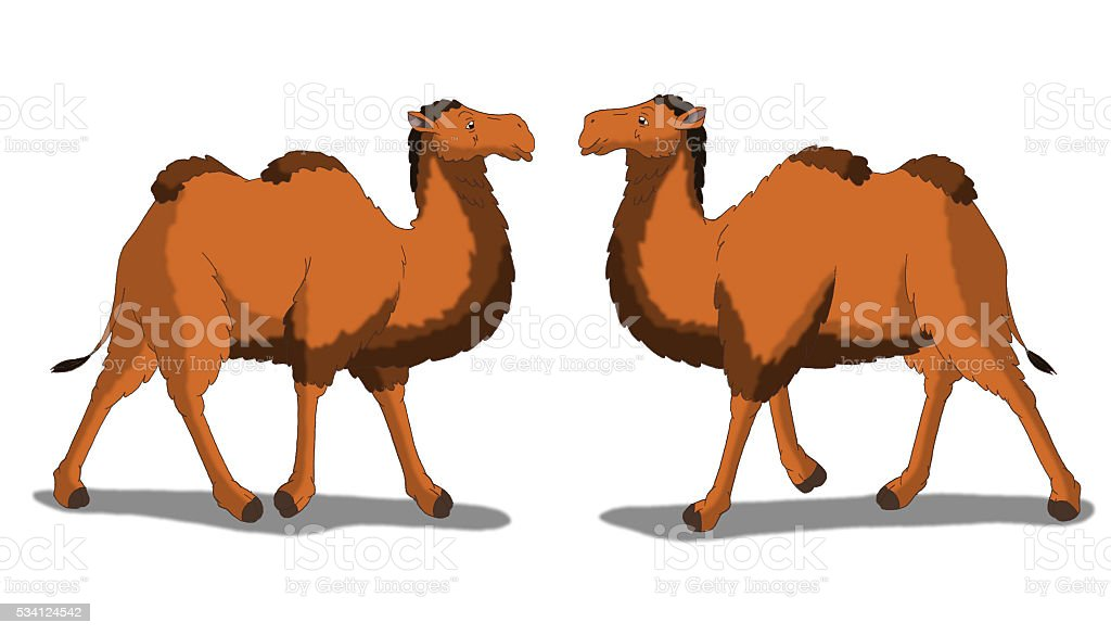 Bactrian Camel Isolated on White Background vector art illustration