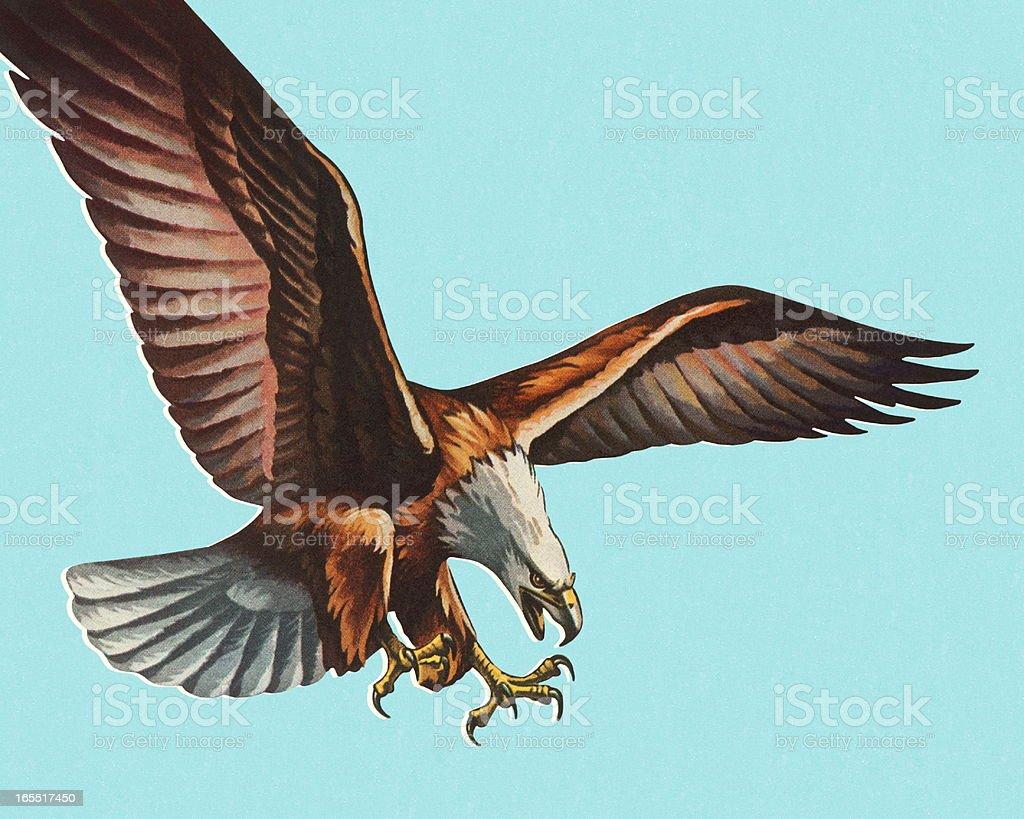 Bald Eagle vector art illustration