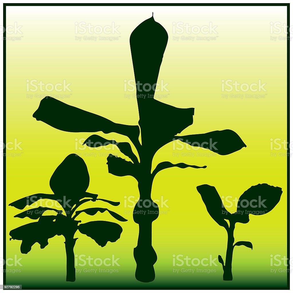 Banana Tree royalty-free stock vector art