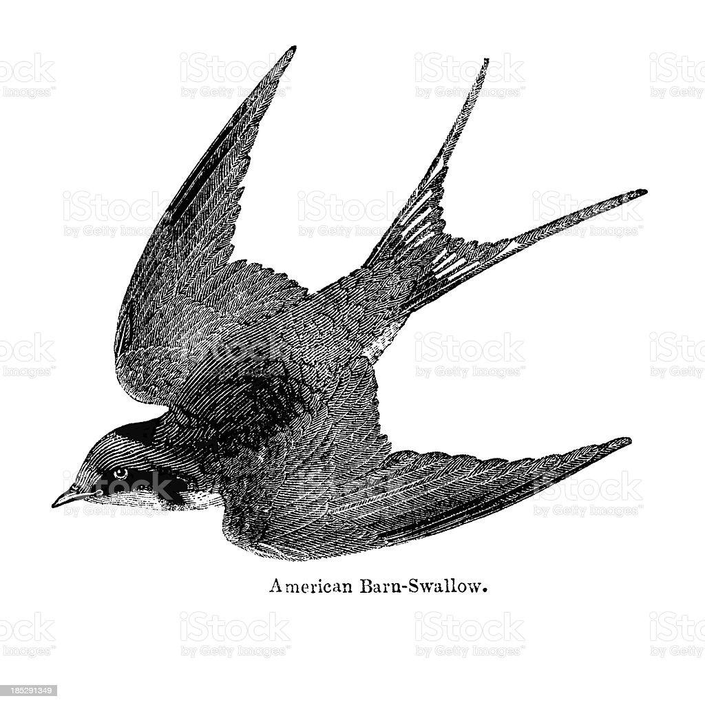 Barn Swallow Illustration Stock Vector Art 185291349