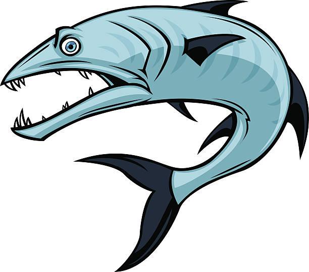 Barracuda Animal Clip Art, Vector Images & Illustrations - iStock