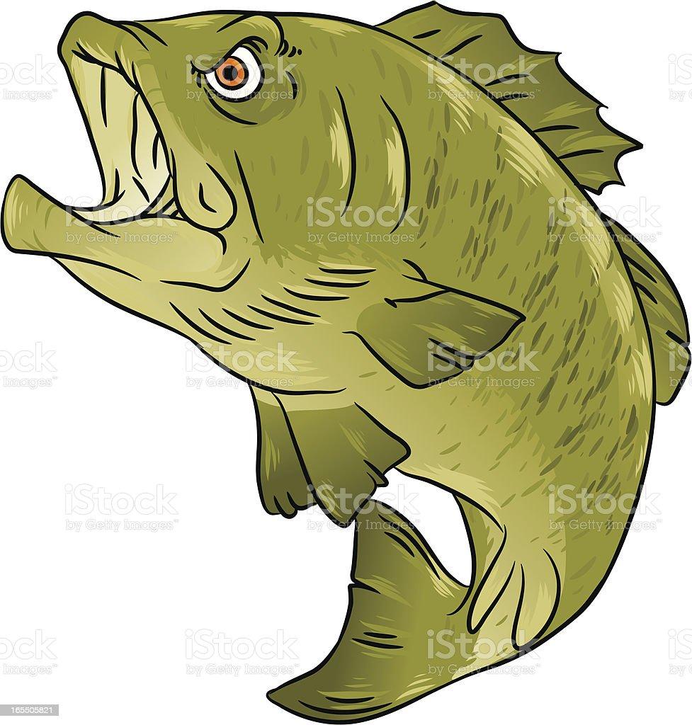 bass fish royalty-free stock vector art