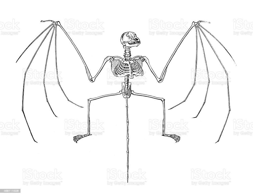 Bat Skeleton vector art illustration