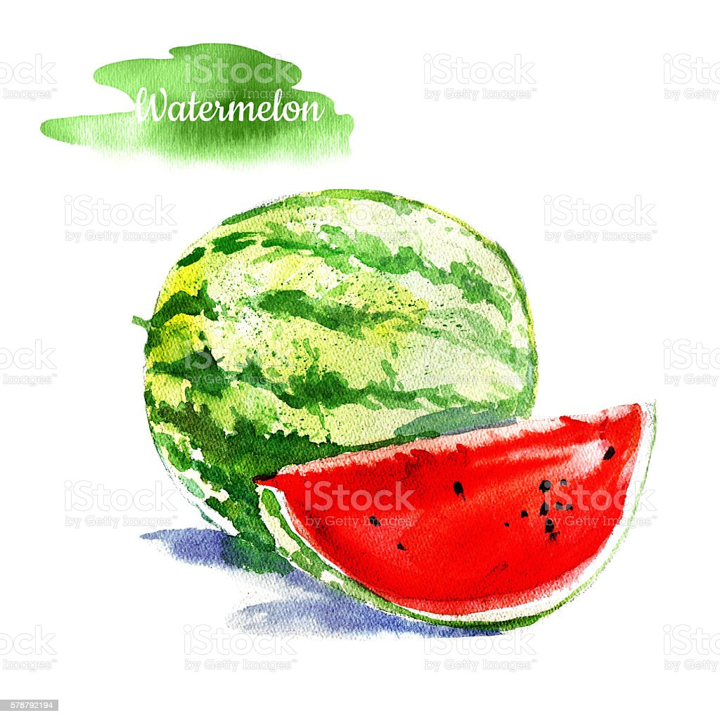Beautiful bright fresh hand drawn watercolor watermelon stock photo