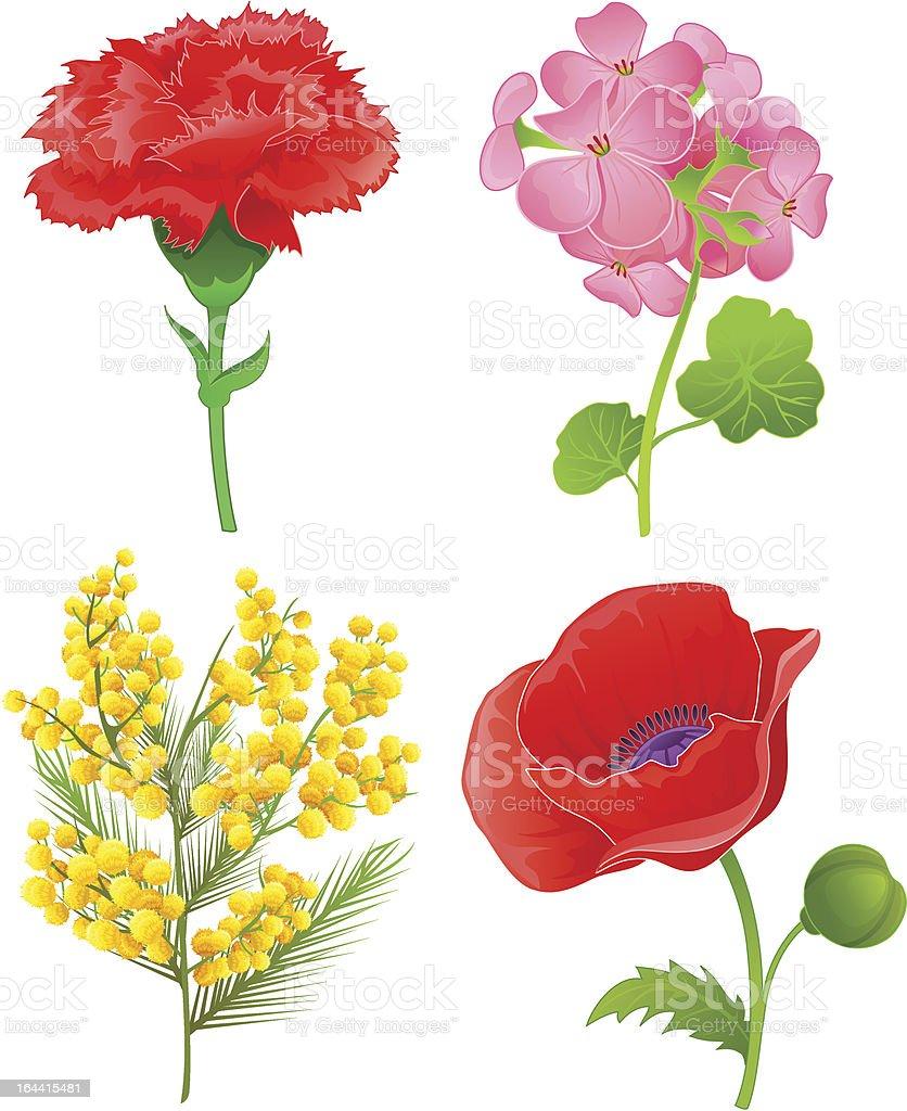 Beautiful flowers set four vector art illustration