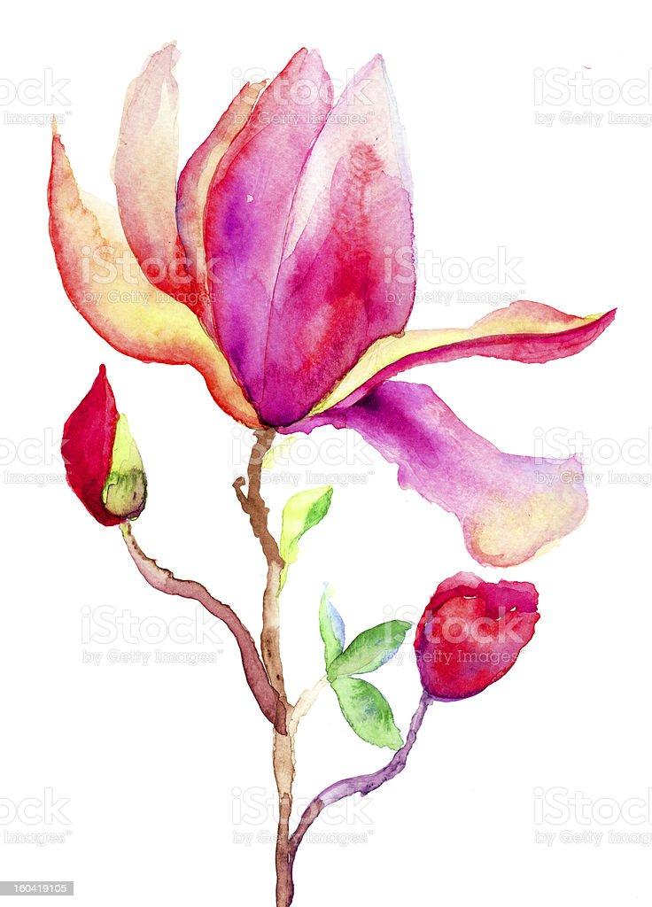 Beautiful Magnolia flowers royalty-free stock vector art