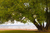 Beautiful old tree on the shore of Lake Huron