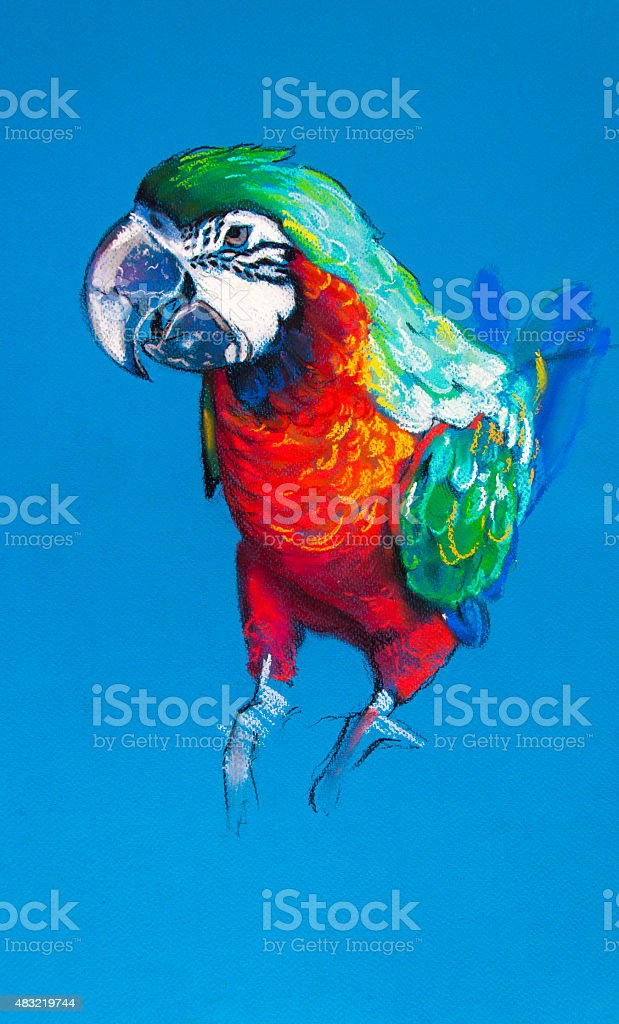 Beautiful parrot on a blue background. vector art illustration