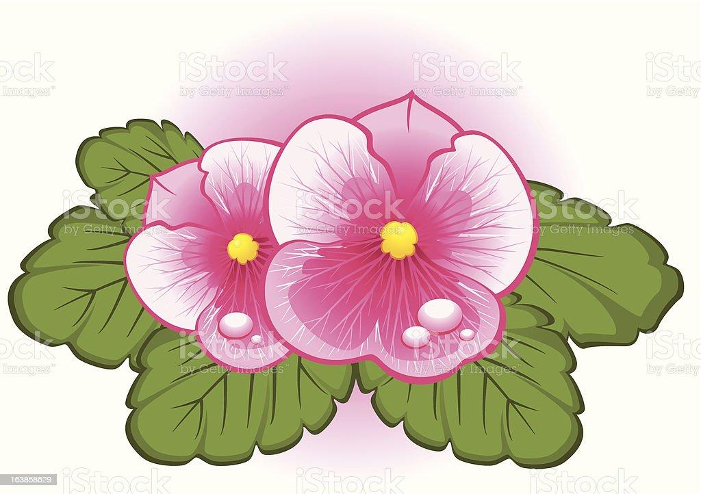 Beautiful pink pansy. Vector royalty-free stock vector art