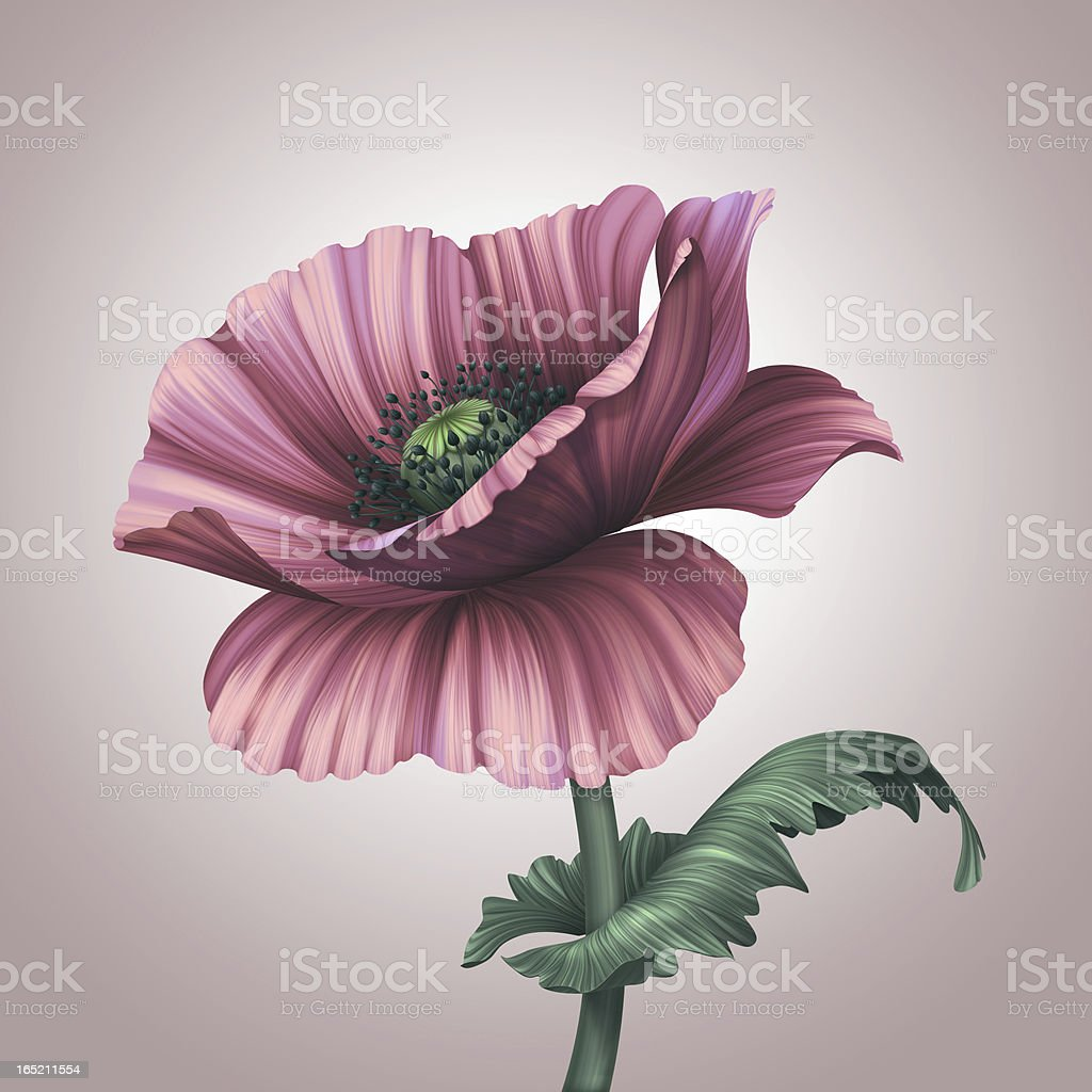 Beautiful pink poppy flower royalty-free stock vector art