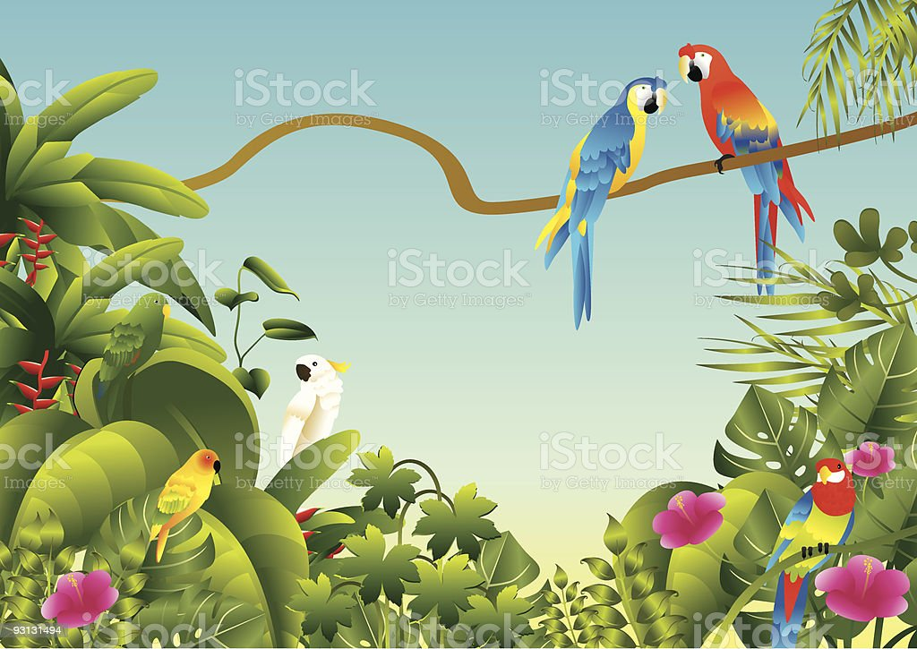 Beautiful tropical birds in a lush green rainforest. royalty-free stock vector art