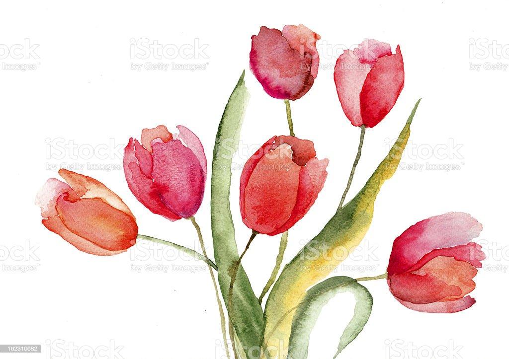 Beautiful Tulips flowers vector art illustration