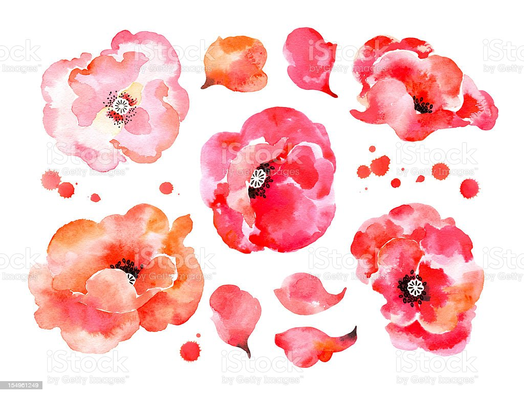 beautiful watercolor poppies vector art illustration