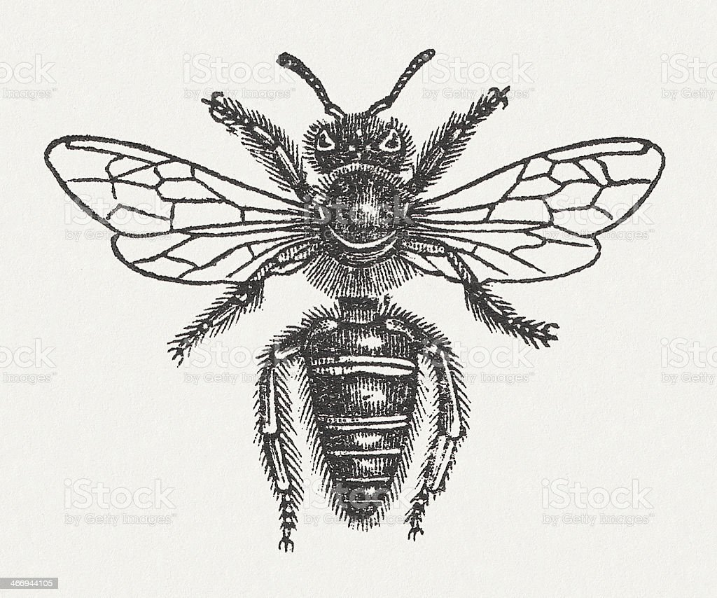 Bee vector art illustration