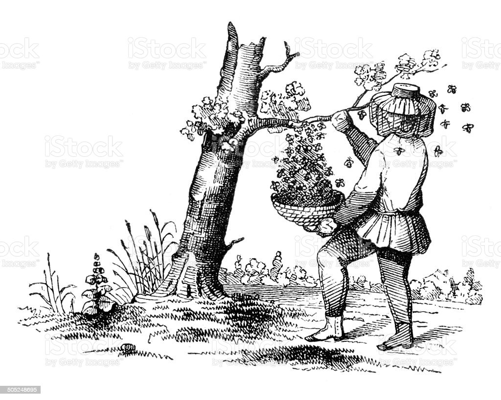 Beekeeper reaping honey from tree 1849 vector art illustration