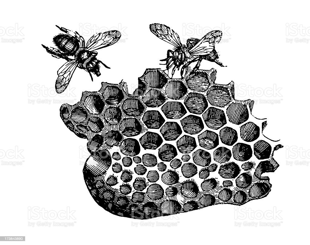 Bees in a Honeycomb vector art illustration
