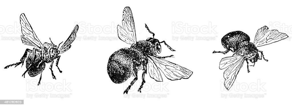 Bees In Threes vector art illustration