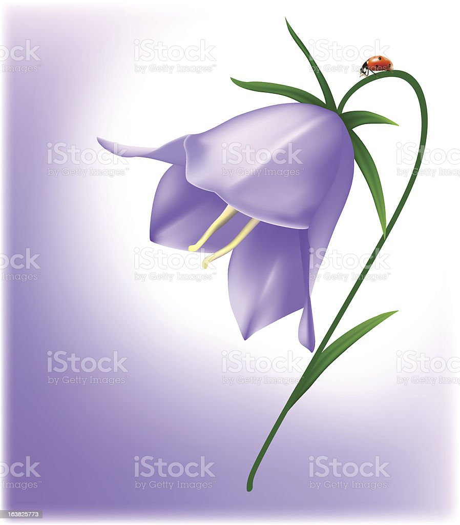 Bellflower royalty-free stock vector art