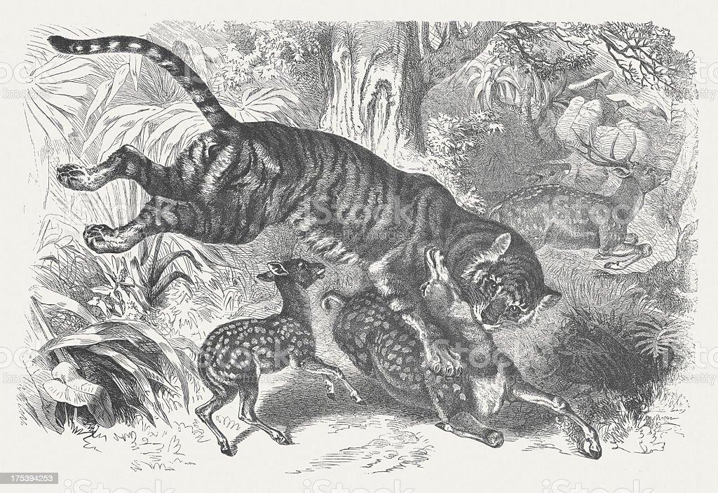 Bengal tiger (Panthera tigris tigris), wood engraving vector art illustration
