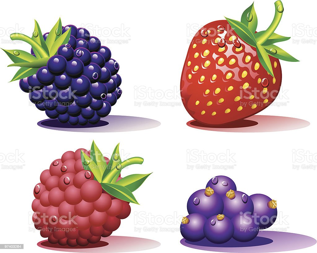 Berries vector art illustration