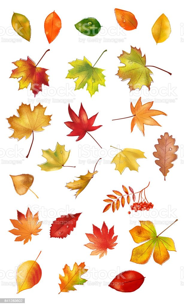 Big collection of colorful autumn leaves vector art illustration