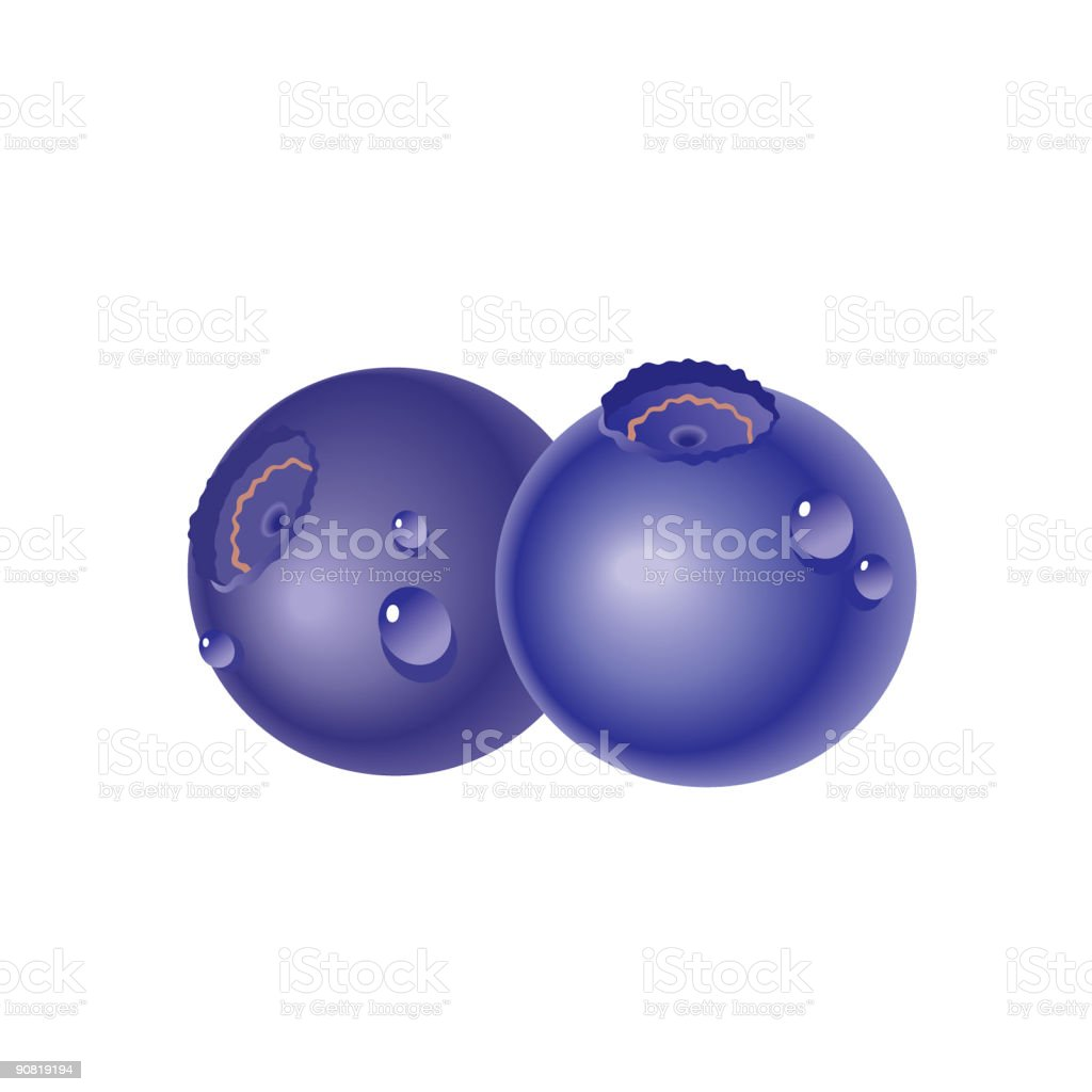 bilberry royalty-free stock vector art