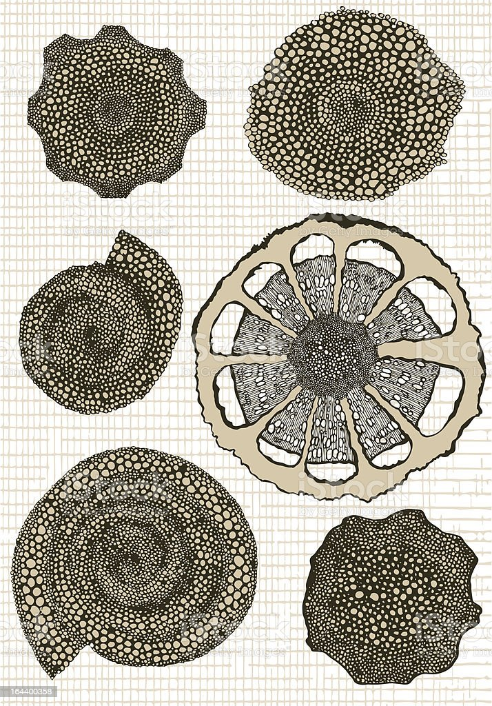 Biology elements.Part 3 royalty-free stock vector art