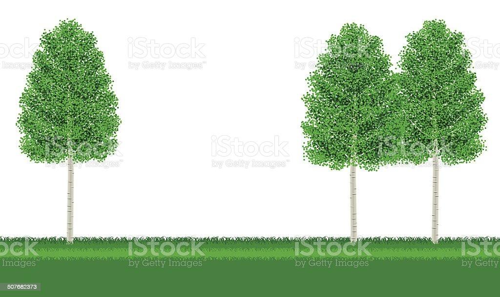 Birch. Landscape vector art illustration