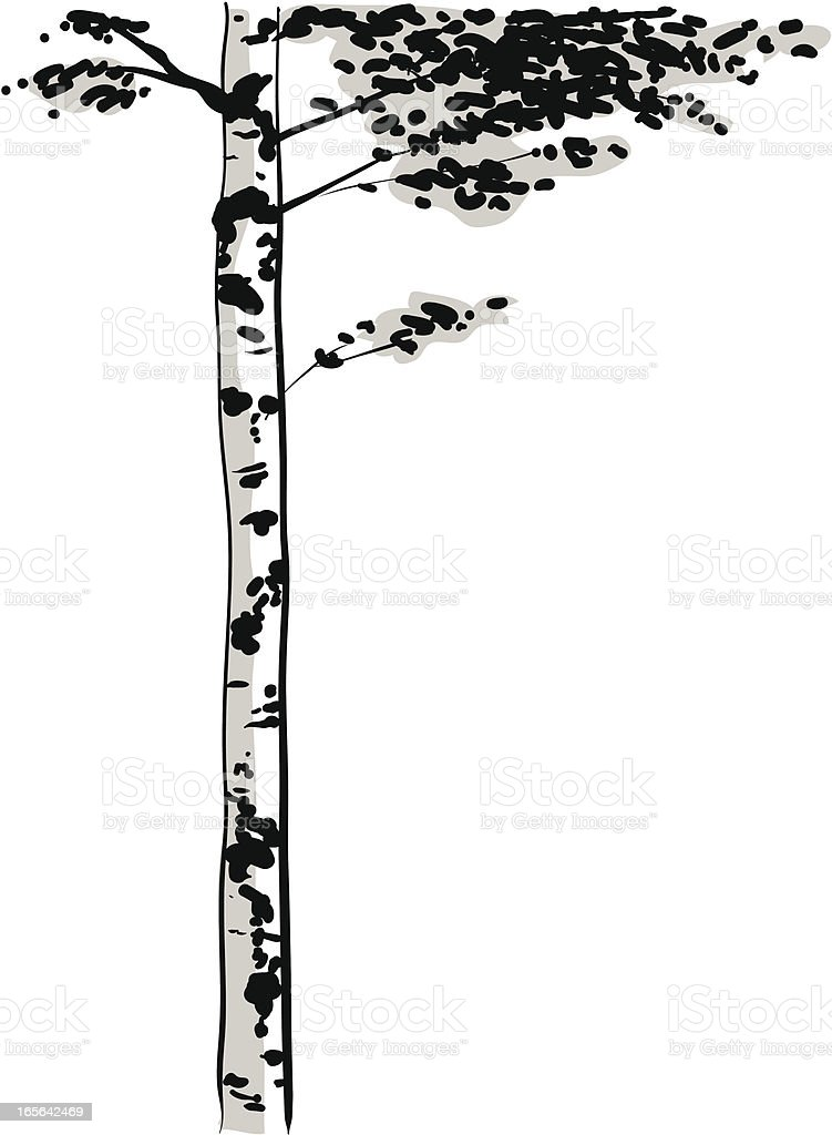Birch Tree royalty-free stock vector art