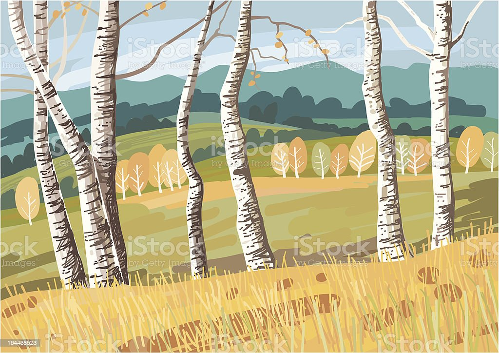 Birches royalty-free stock vector art
