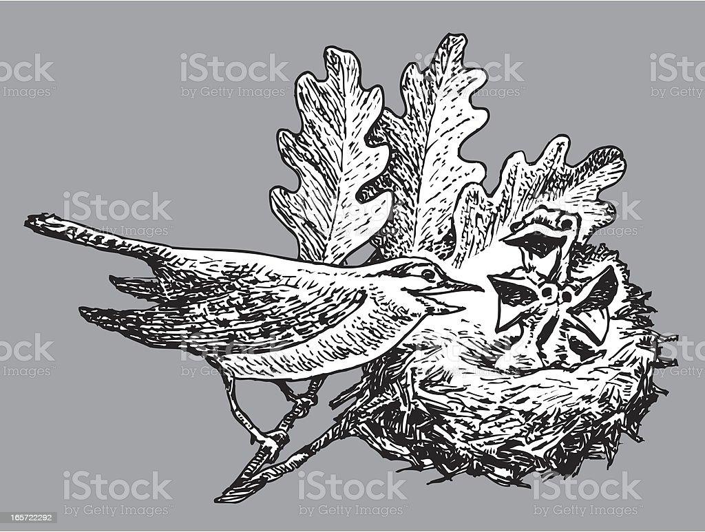 Bird and Chicks in Nest vector art illustration